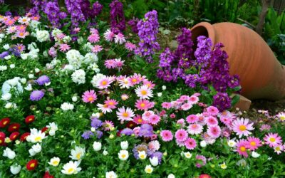 Садовые цветы: от вершка до корешка